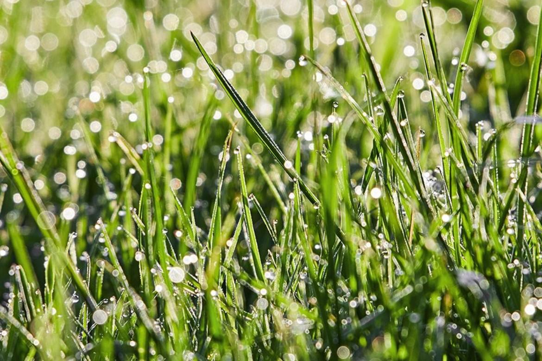 Gli strumenti per una gestione eco compatibile del tappeto erboso