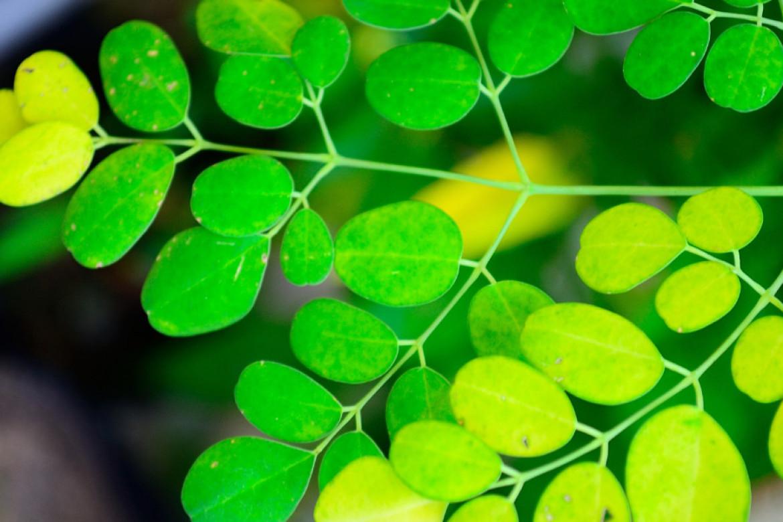 I sintomi delle carenze nutritive nelle piante
