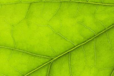 LA NUTRIZIONE MINERALE DELLE PIANTE: MACRO E MICRONUTRIENTI A CONFRONTO
