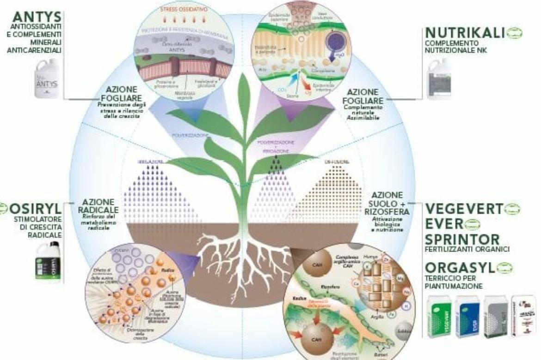 Come nutrire e biostimolare la pianta partendo dalla rizosfera