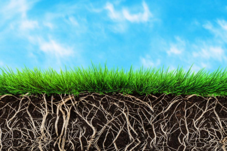 Concimazione organica e sementi micorrizate: un binomio vincente
