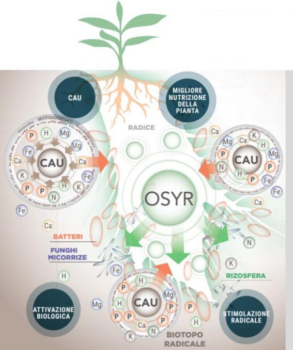 modalità di azione dell'ammendante organico Vegethumus