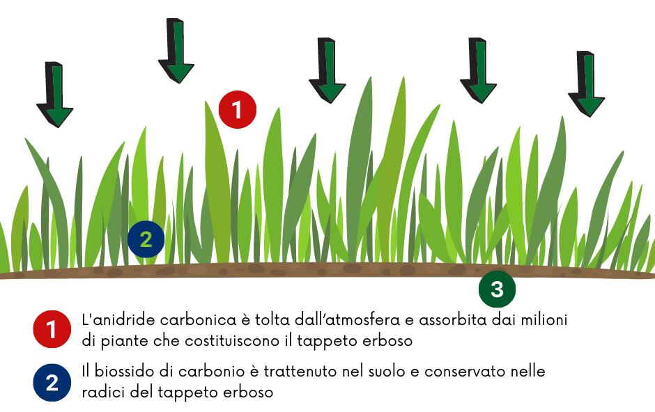 I benefici del tappeto erboso: cattura dell'Anidride Carbonica