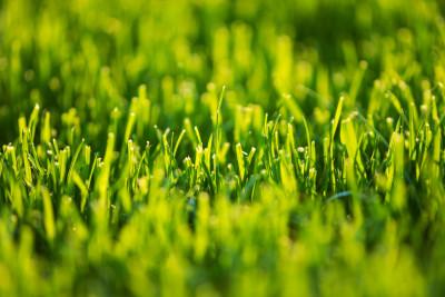 La Sostanza Organica del suolo: diverso valore a seconda dell'origine