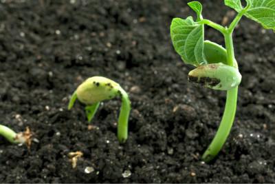 Biostimolanti e nutrizione del suolo e delle piante